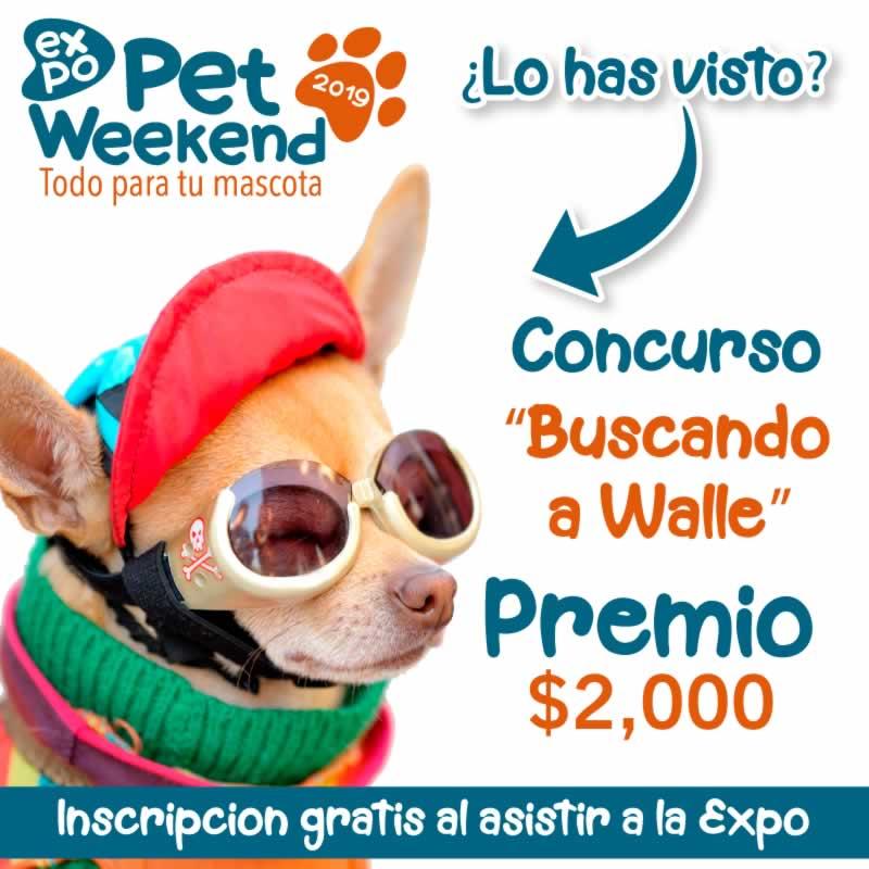 Expopet Guadalajara 2019 Concurso Walle